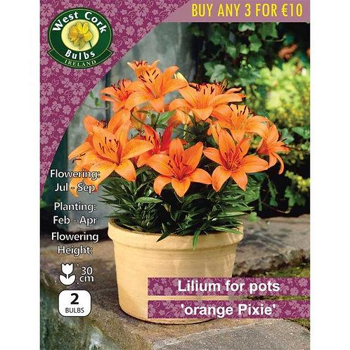 Lilium for Pots Prepack Summer Bulbs