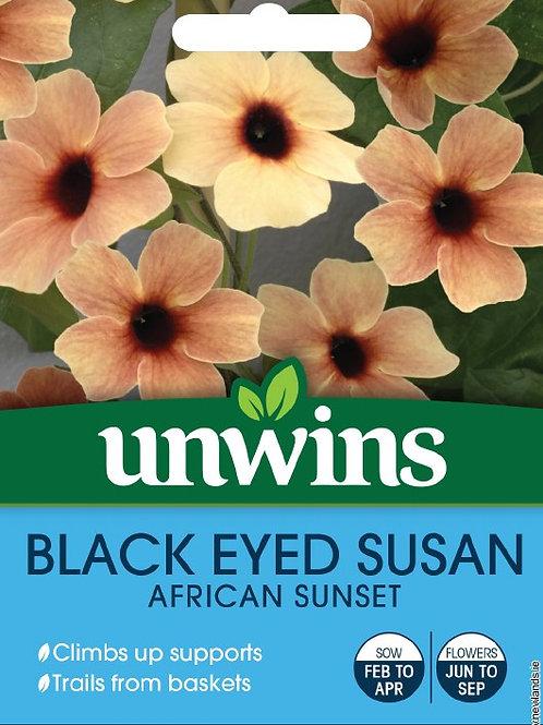 Unwins Black Eyed Susan African Sunset