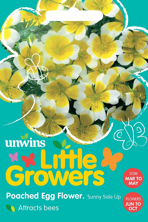 Unwins Little Growers Poached Egg Flower Attracts Bees