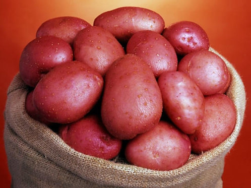 Rooster Maincrop Seed Potato's 2kg