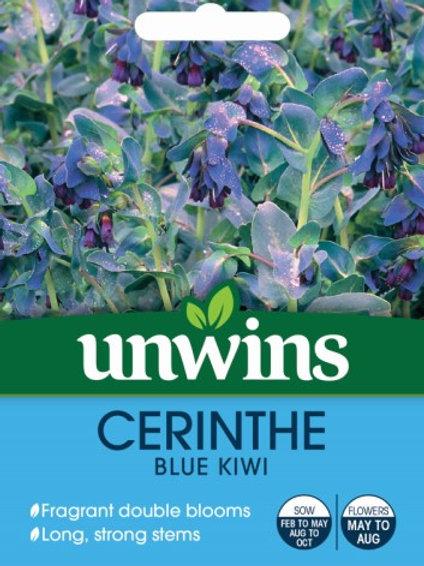 Unwins Cerinthe Blue Kiwi