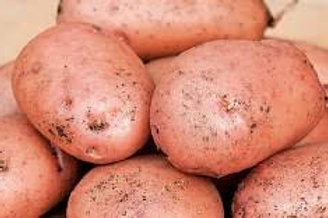 Records Maincrop Seed Potato's 2kg