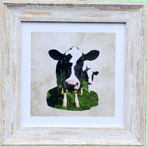 Cow Square Frame Photo