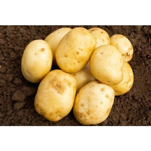Homeguard First Earlies Sewed Potato's  2KG
