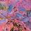 Thumbnail: Cotinus Royal Purple