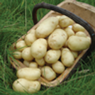 Sharpes Express First Early Seed Potato's 2kg