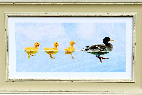 Ducks Rectangular Frame Photo