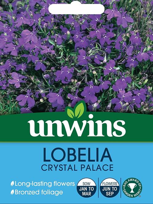 Unwins Lobelia Crystal Palace