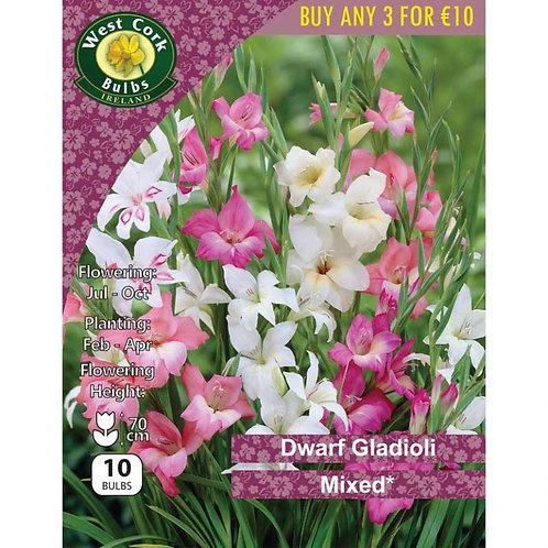 Gladioli Dwarf mixed varieties Prepack Summer Bulbs