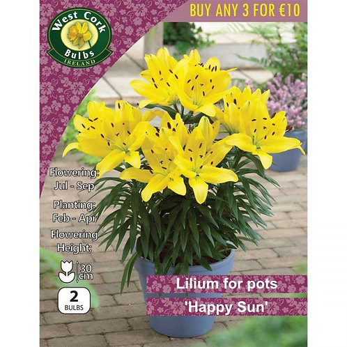 Lilium for Pots Happy Sun Prepack Summer Bulbs