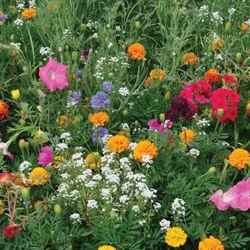 Unwins Annual Flowers Container Mix