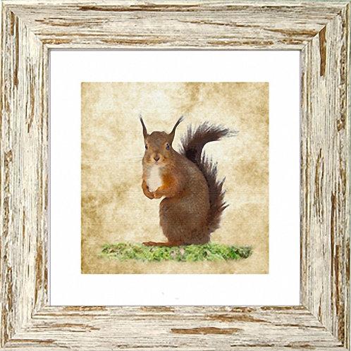 Squirrel Square Frame Photo