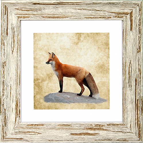 Fox Square Frame Photo