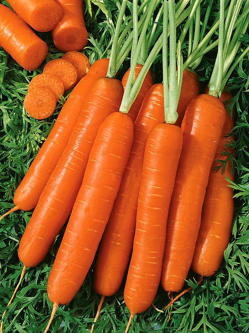 Unwins Carrot Norwich 1