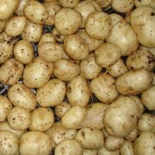 Duke of York First Early Seed Potato's 2kg