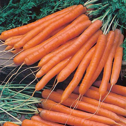 Unwins Carrot Amsterdam 2 Sweetheart
