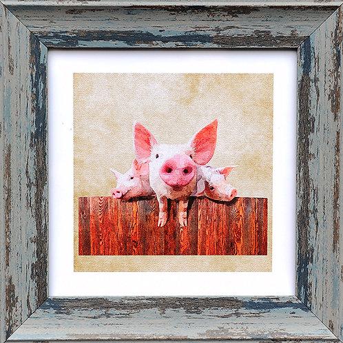 Pigs Square Frame Photo