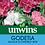 Thumbnail: Unwins Azalea Flowered Mix