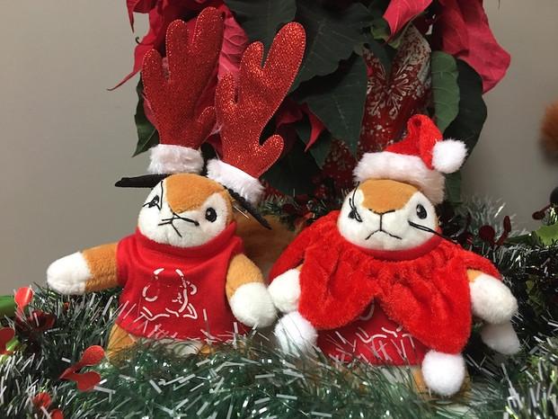 Christmas Squirrels