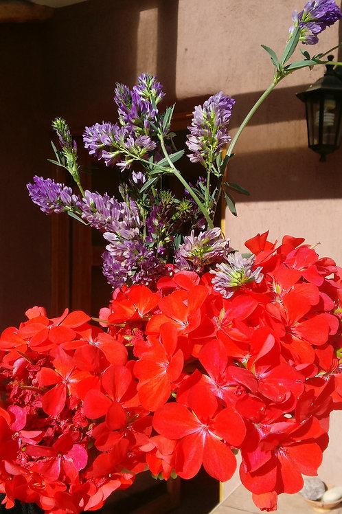 Lavender Rose Geranium Cream