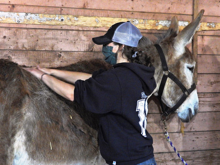 The spark to become an equine therapist