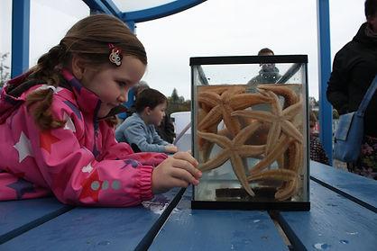 Girl looking at starfish.JPG