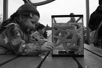 Girl looking at starfish_edited.jpg