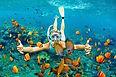 Explore Nearby Sea Life