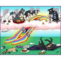 rainbow bridge greyhounds