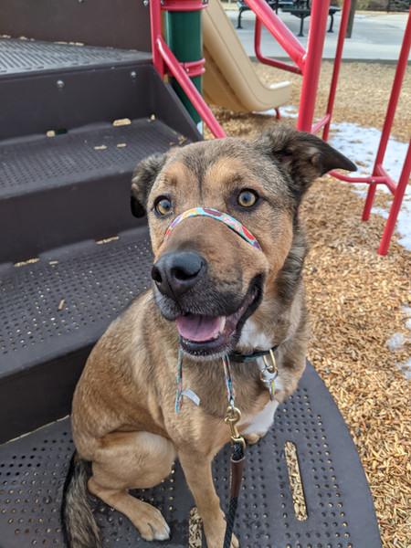 Reese's Playground Dog Training
