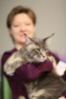 Коты и котята мейн-кун