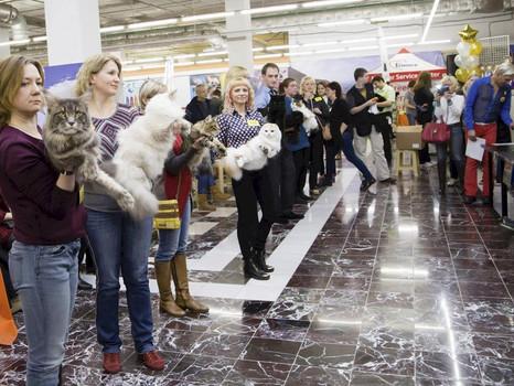 Всемирная выставка кошек 10-11 октября Санкт-Петербург