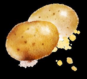 Kartoffel.png