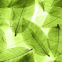 Seamless  green leaves background.jpg