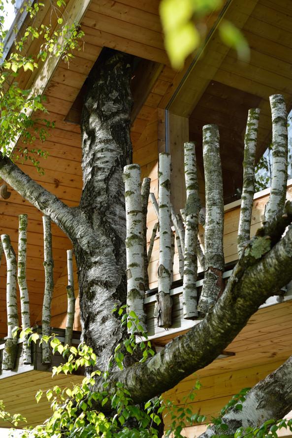 lesna hiša Dom med brezami Gašper Fabijan_10