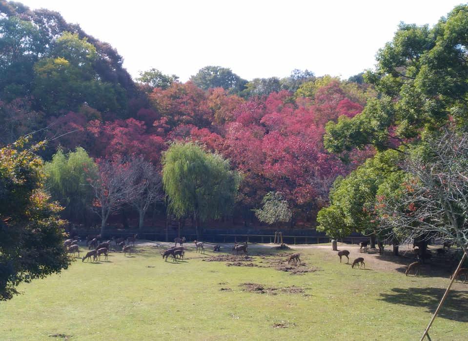 Near Araike in Nara park