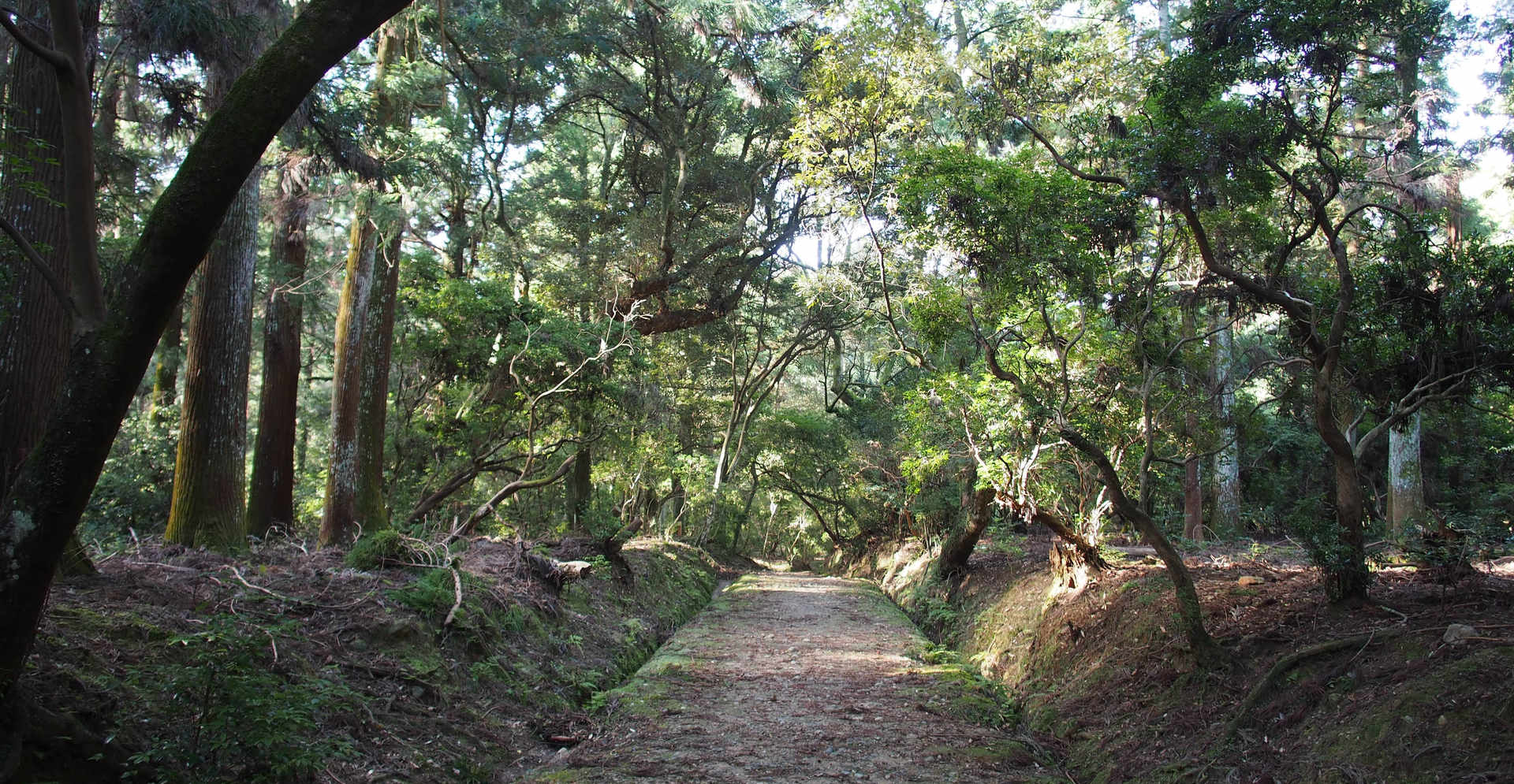 Shrine priests' road /春日大社禰宜道