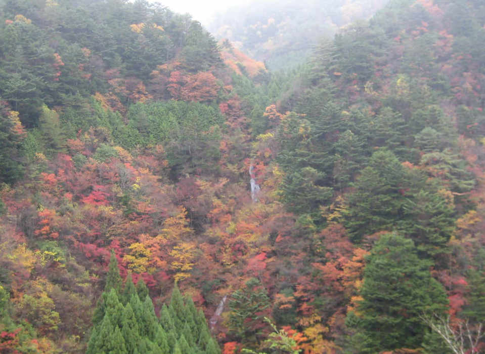 Autumn colored leaves of Nosegawa village