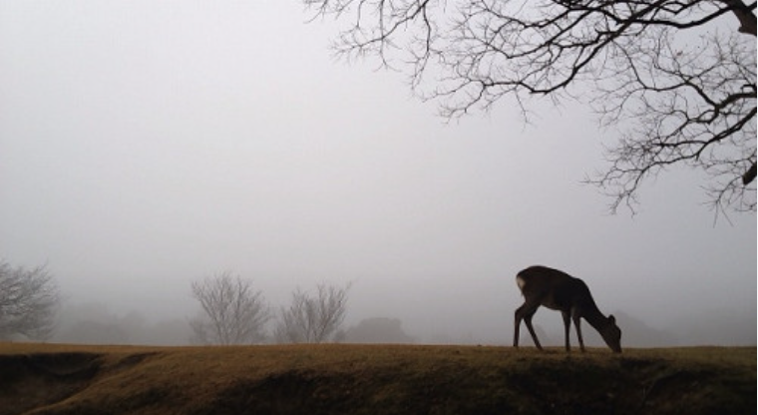 A deer in the fog