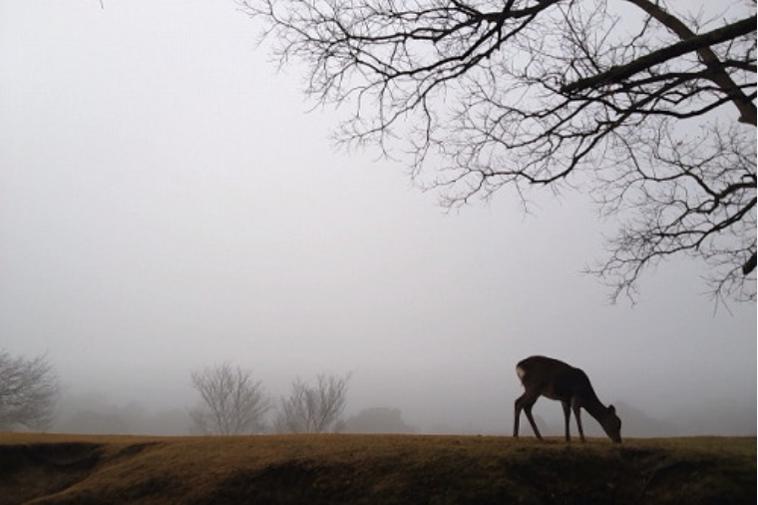 A deer in the fog