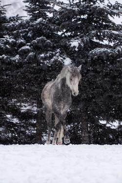 Elegant in Szene gesetzt beim Schnee-Shooting mit Leonie Garten Fotografie