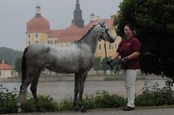 Penny vor dem Schloss Moritzburg 2015