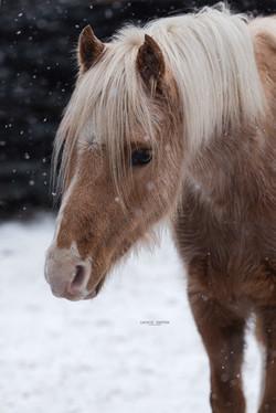 Aufmerksam beim Schnee-Shooting mit Leonie Garten Fotografie