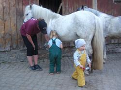 Auch das Versorgen der Ponys kann erlernt werden.