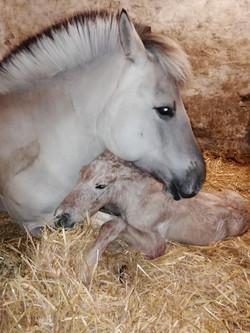 Delya unmittelbar nach ihrer Geburt