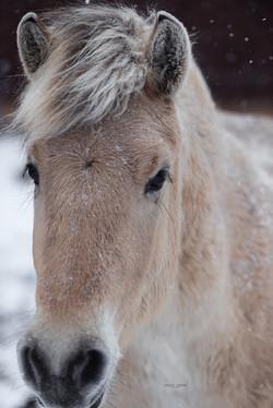 Delya beim Schnee-Shooting mit Leonie Garten Fotografie