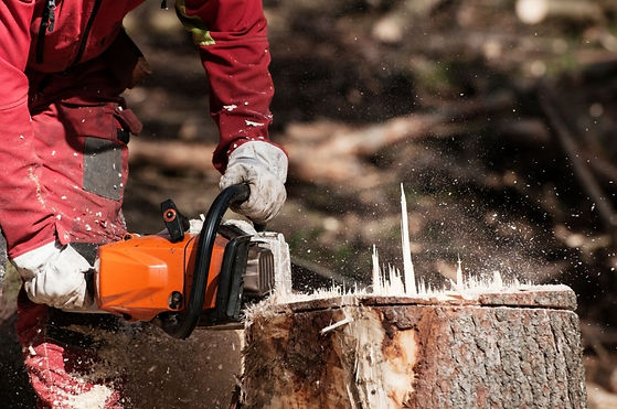 cutting a stump two gloved hands