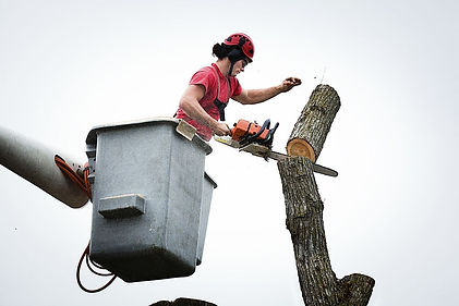 Gilbert tree service pros employee in the air trimming a tree