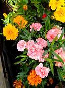 VH carnations.jpg