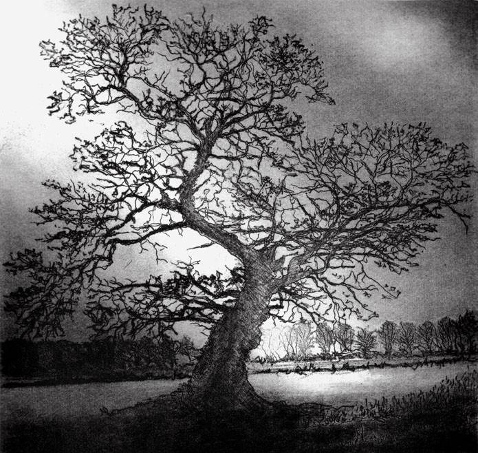 'Winter Oak'